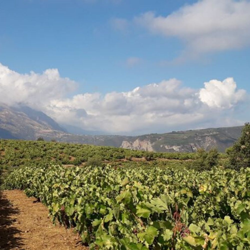 Greek vineyard Cinque's wine bar list