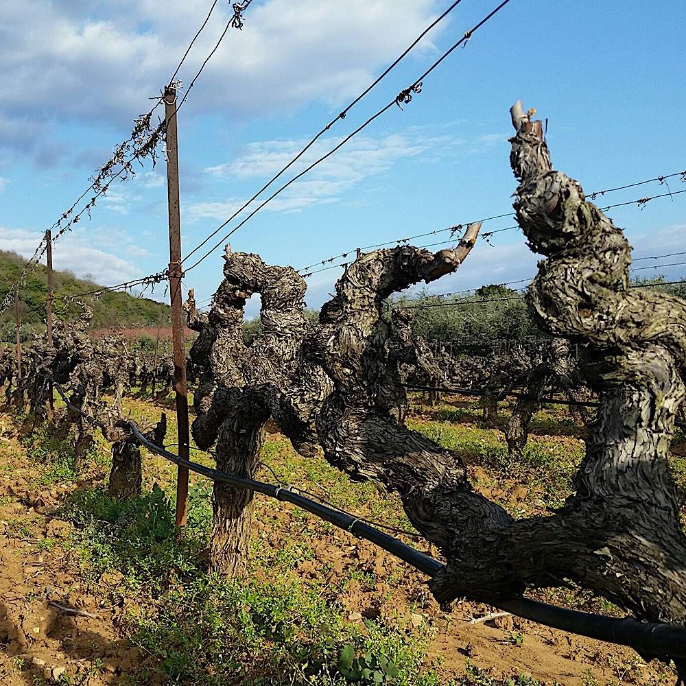 Naoussa grande reserve Xinomavro Boutari Cinque wine bar Athens