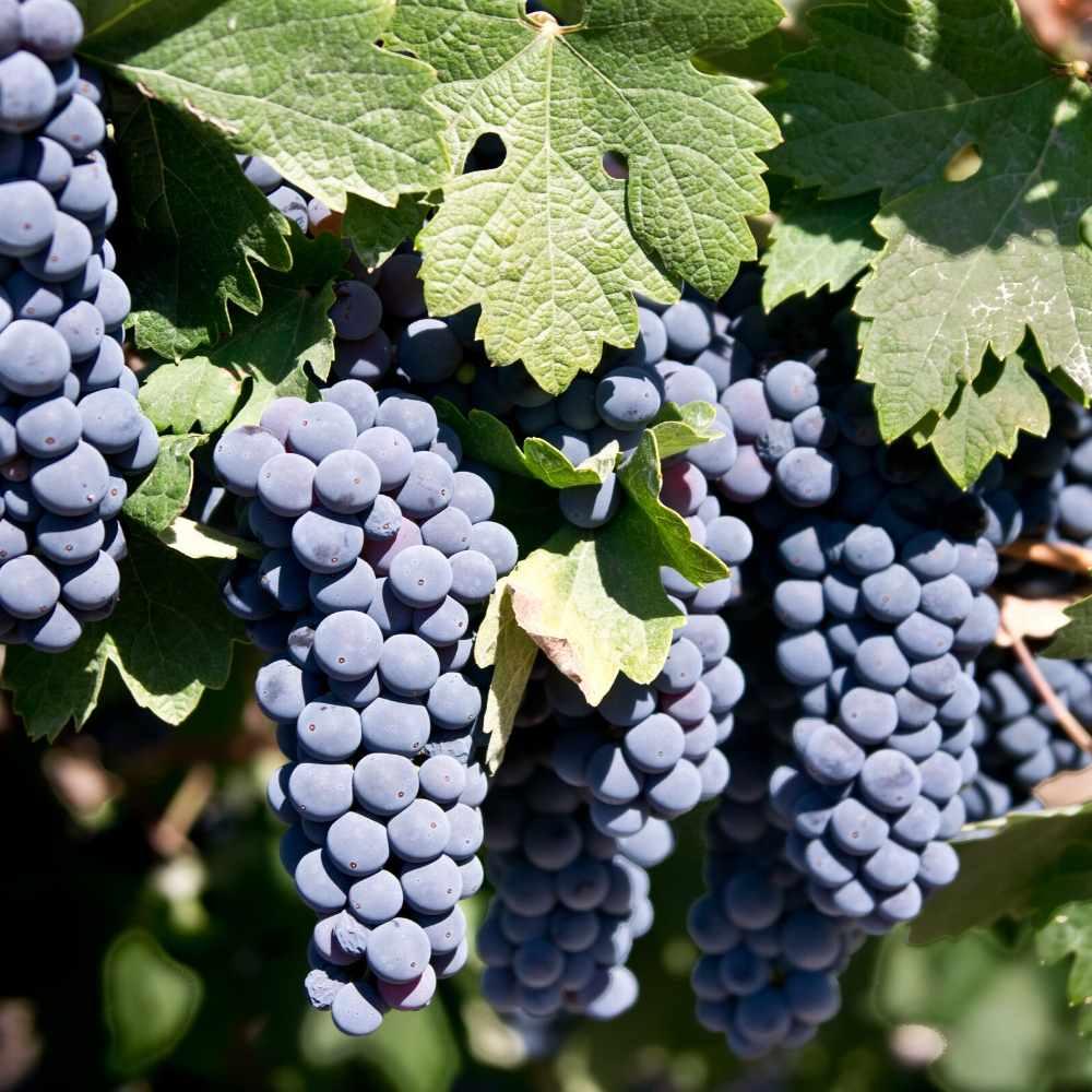Rouvalis Winery