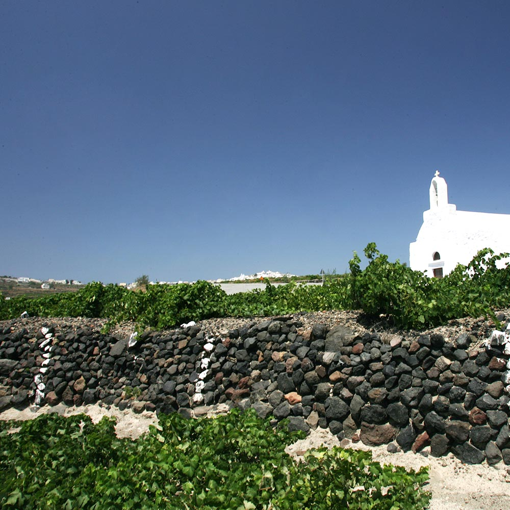 Assyrtiko Santorini greek vineyard Cinque wine bar